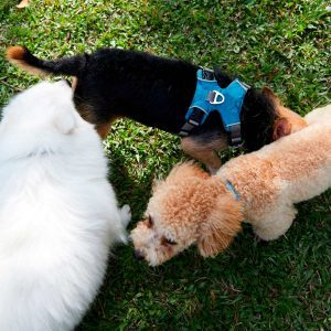 This Is Why Your Dog Likes to Sniff Another Dog's Butt