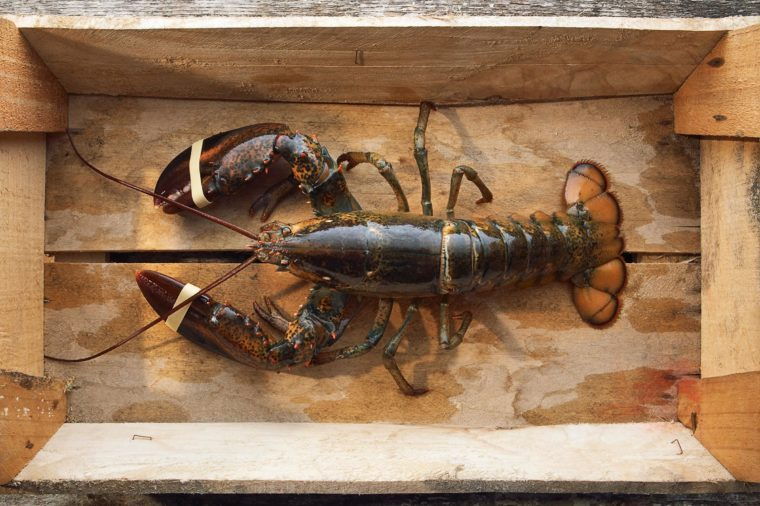 Raw lobster on a wooden box, Top view