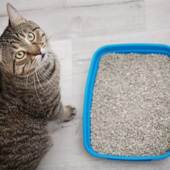 How to Get Rid of Cat Pee Smell That Just Won't Go Away