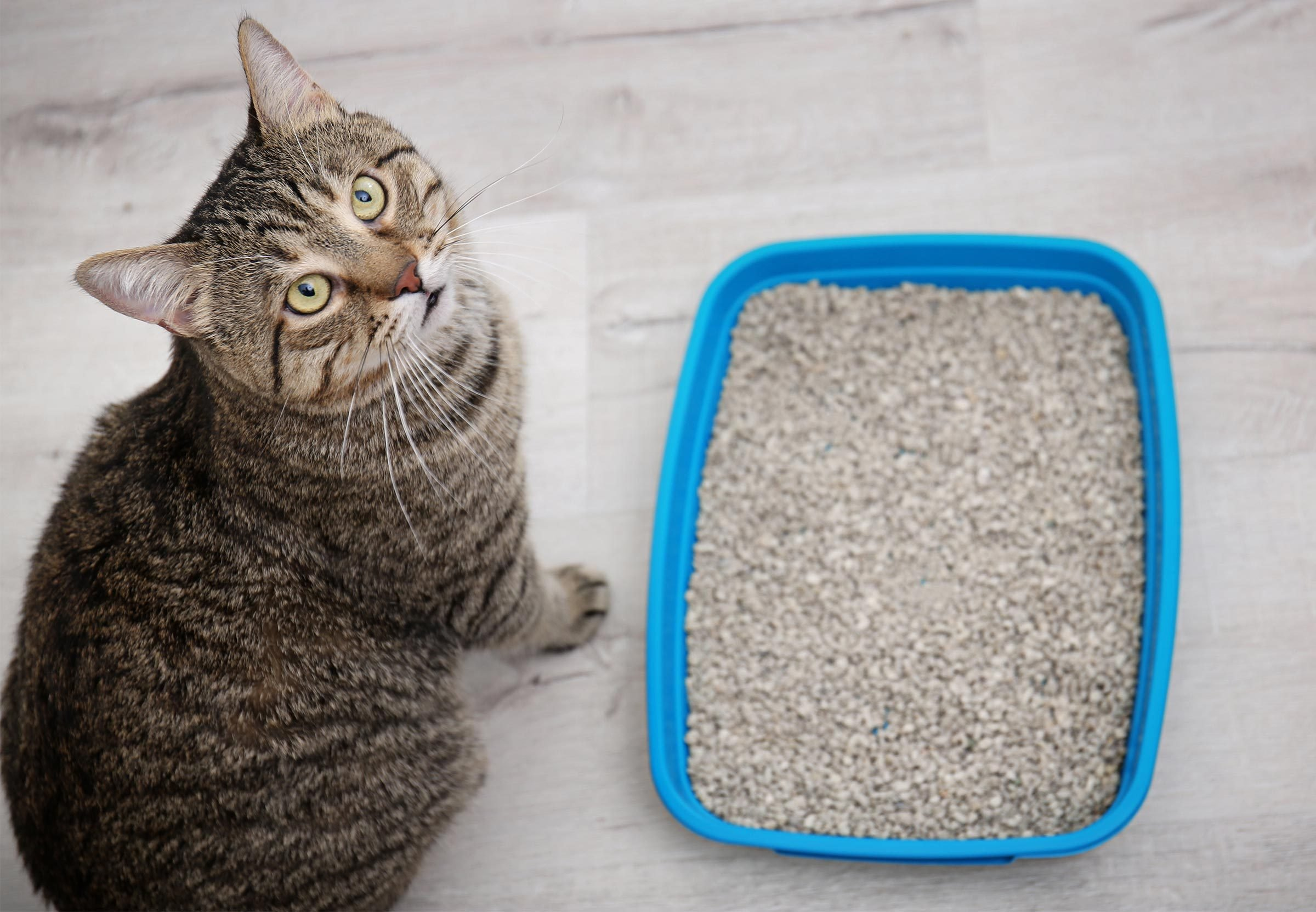 How to get rid of cat pee smell from carpet