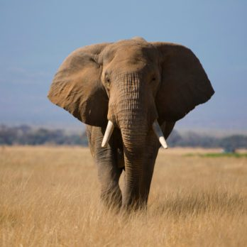 14 Amazing Things You Didn't Know Elephants Could Do