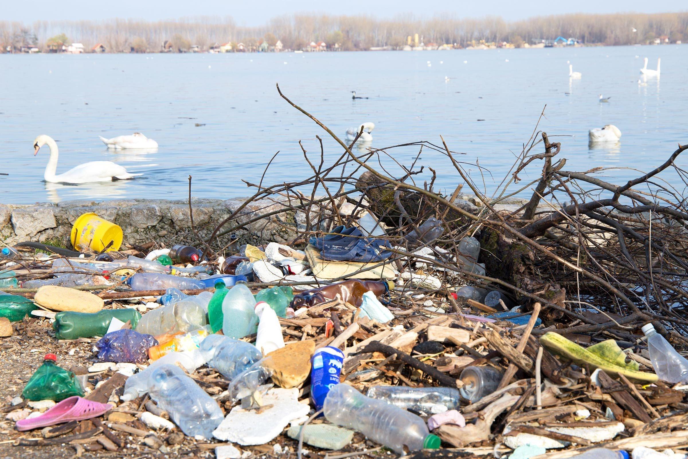 Rubbish on the river Danube