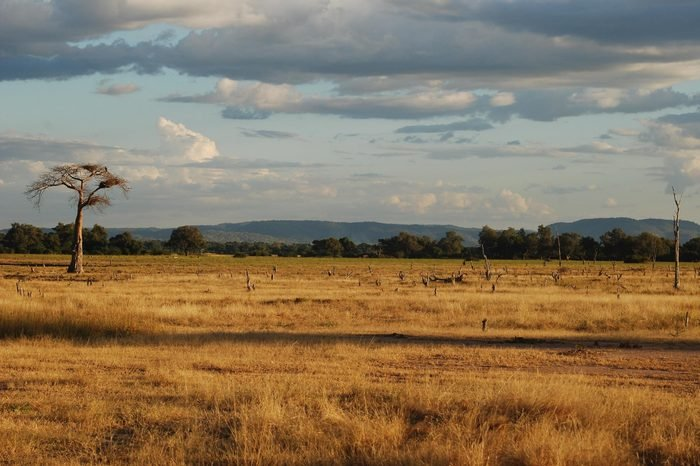 African Plain, South Luangwa National Park, Zambia