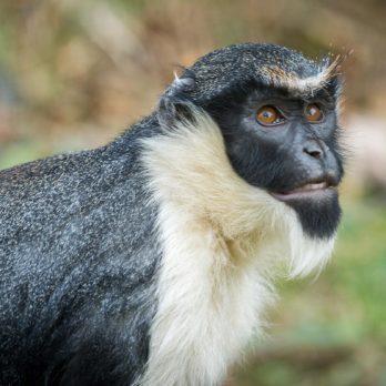 30 Photos of the Rarest Animals on Earth