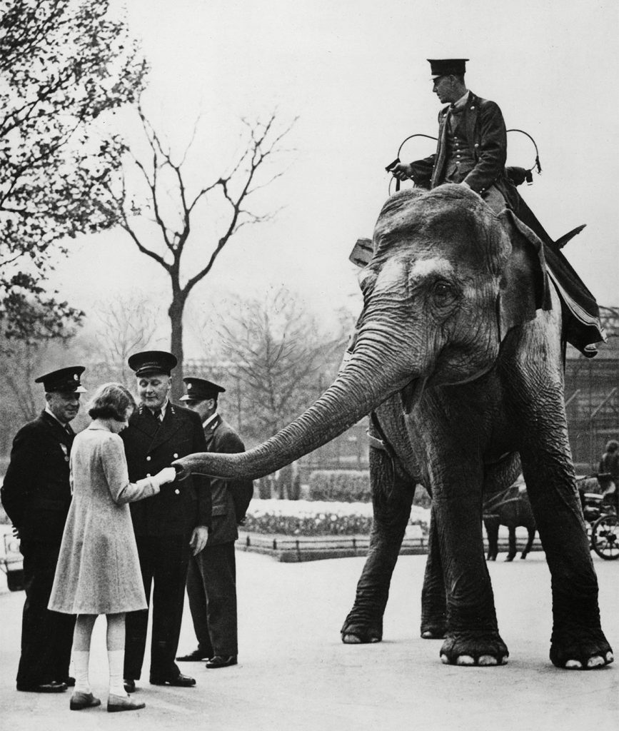 Historical Collection 86 Princess Elizabeth Feeding One of the Elephants at London Zoo c.1940