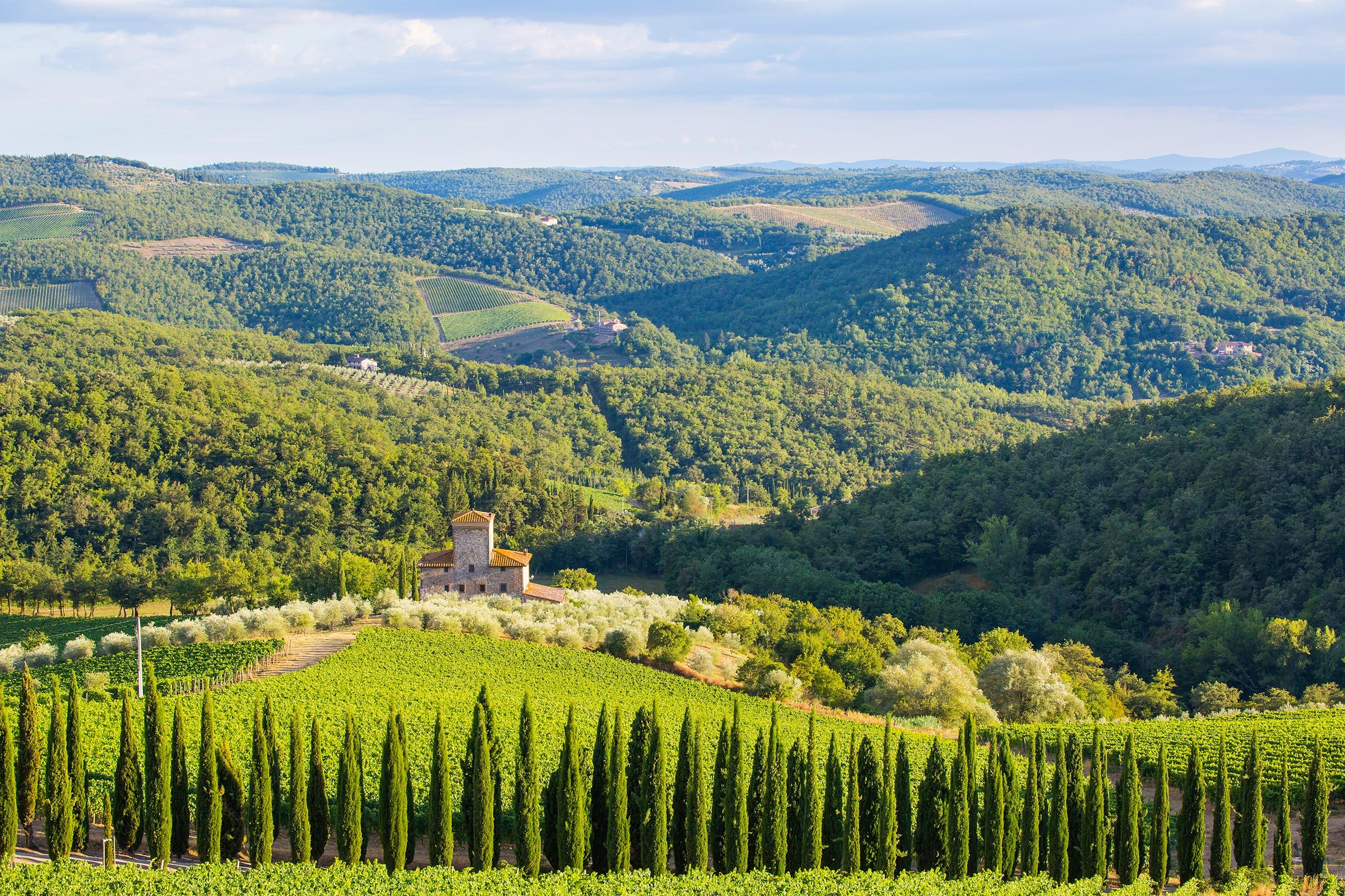 Siena province, Italy - August 6, 2016: Vineyards of the Castello di Albola estate in the Chianti region.