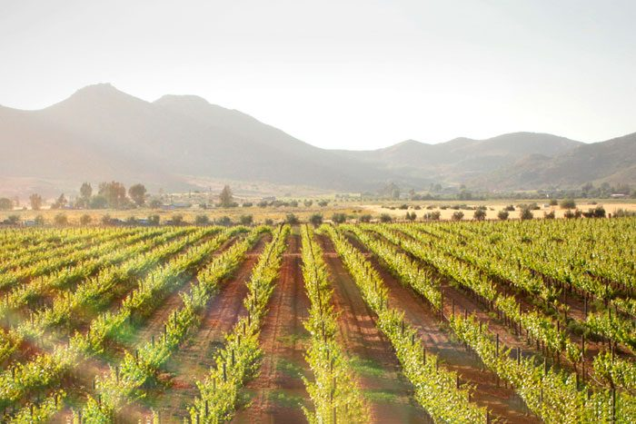 Adobe Guadeloupe Vineyards & Inn, Mexico