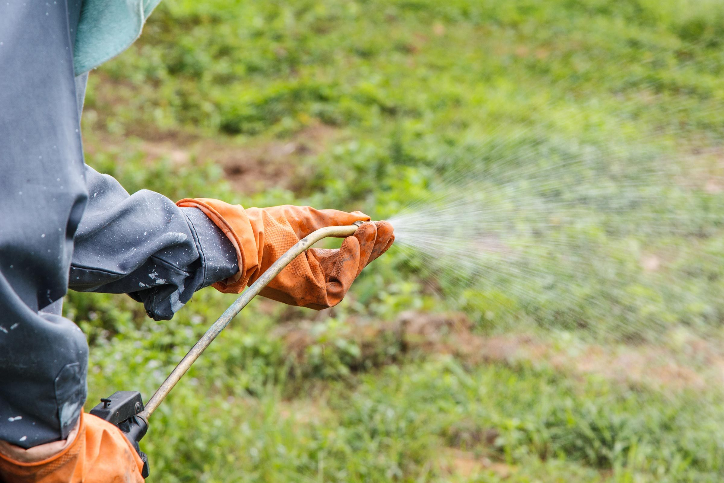 spraying weeds pesticides