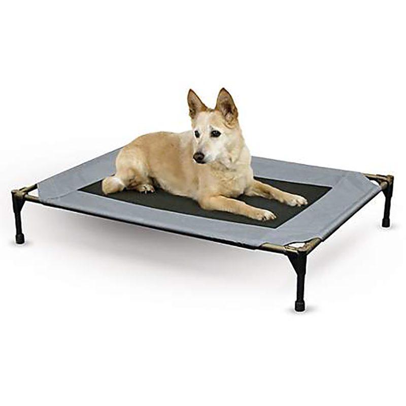 pet cot dog