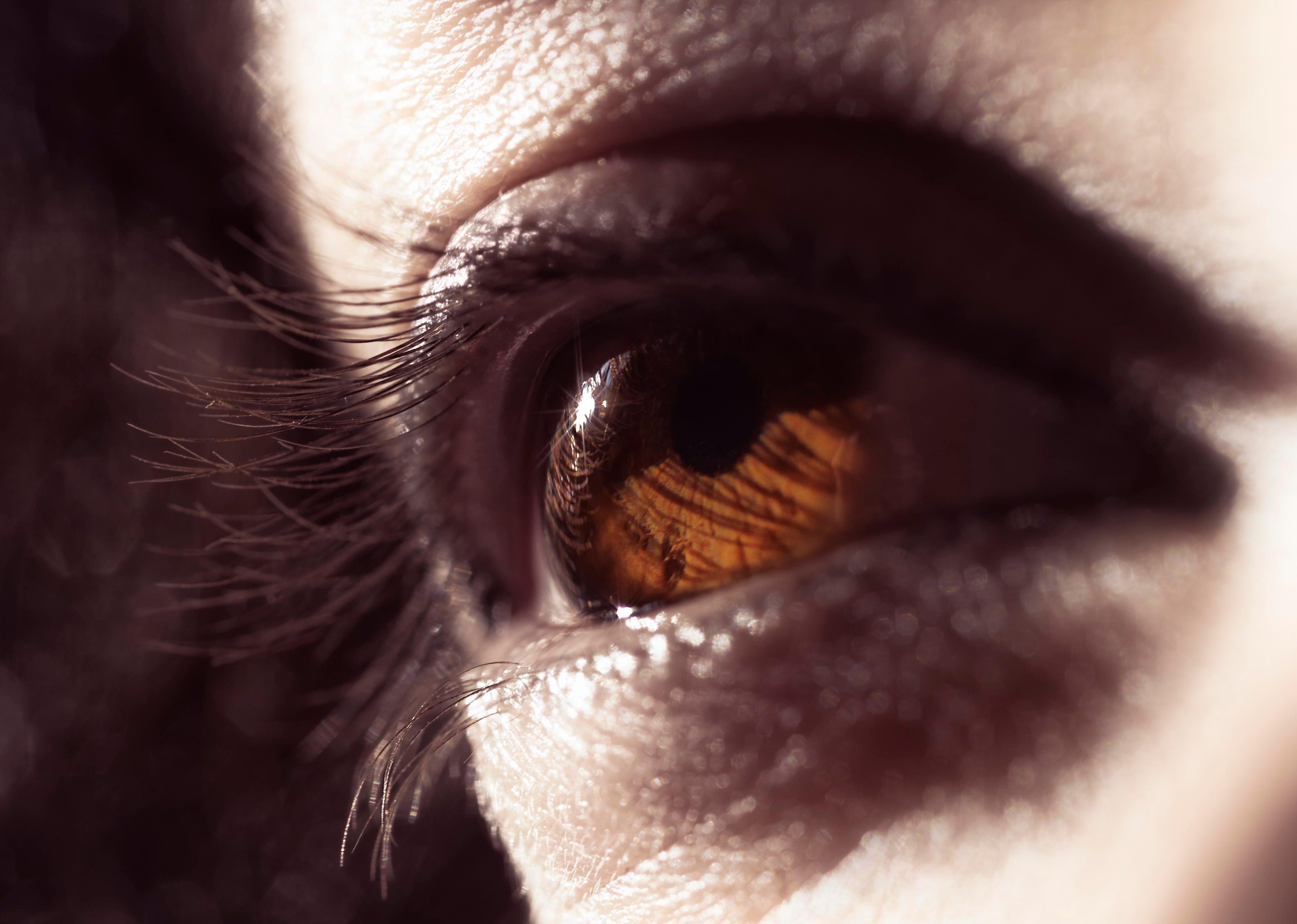 Closeup, a woman's brown eye