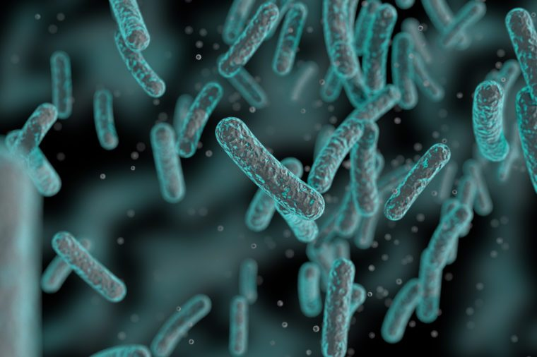 Bacteria, Bacterial colony, Microbes, Salmonella Bacteria