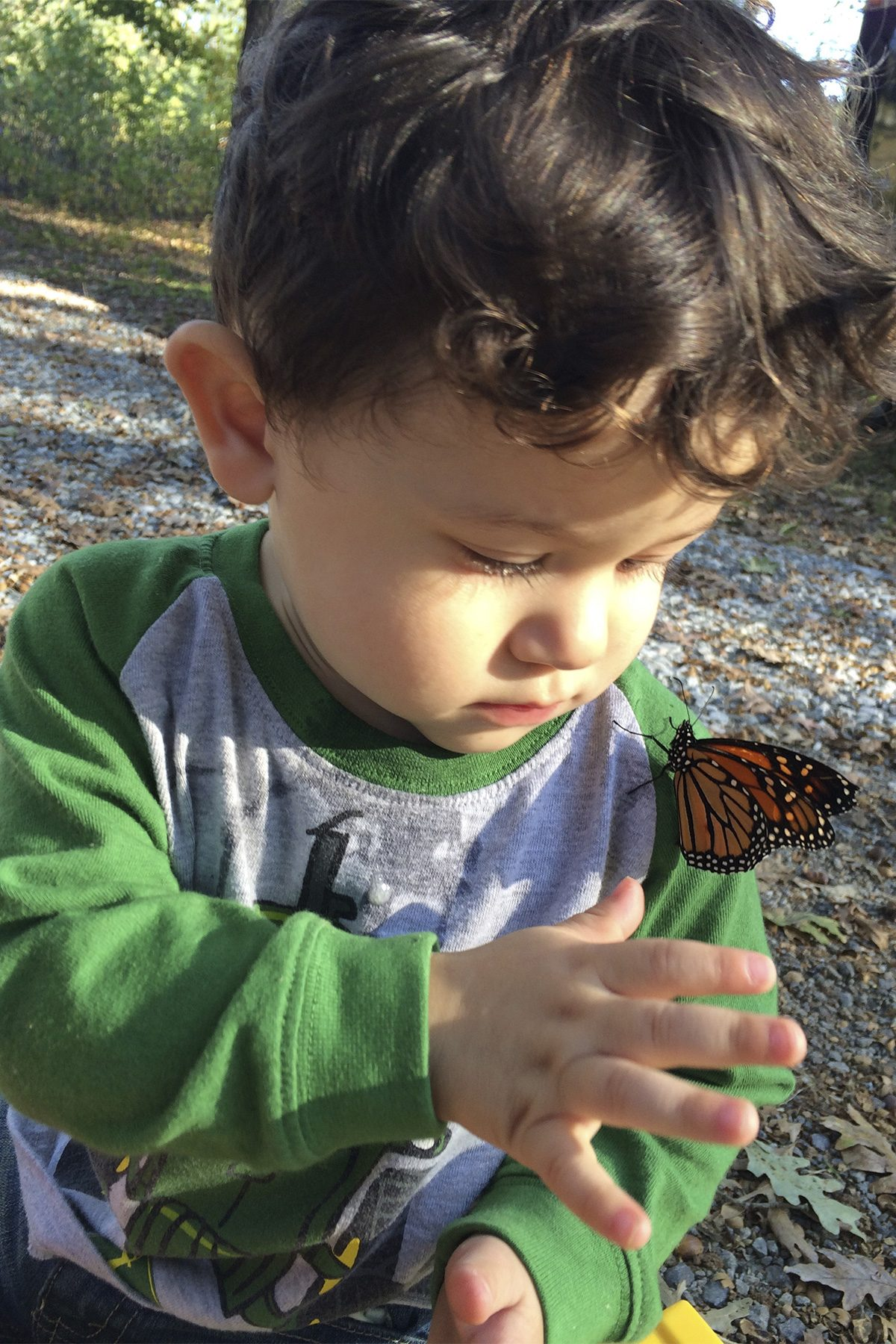 son with butterfly