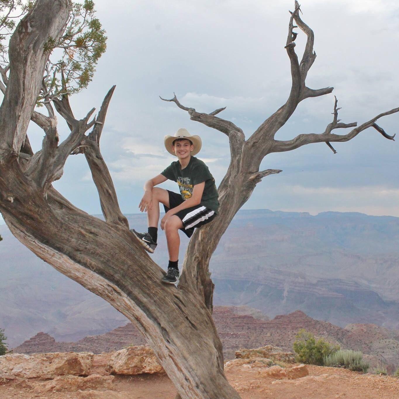 جنون الصور :لا تتسلق الأشجار