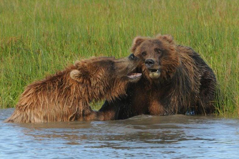 جنون الصور :احذر من الدببة