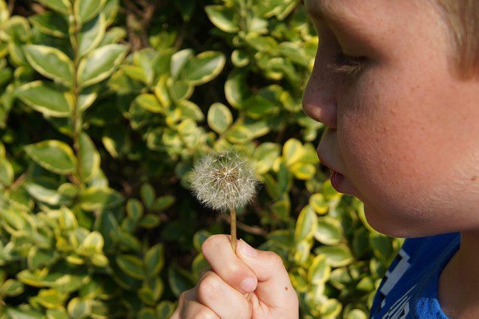little boy plant
