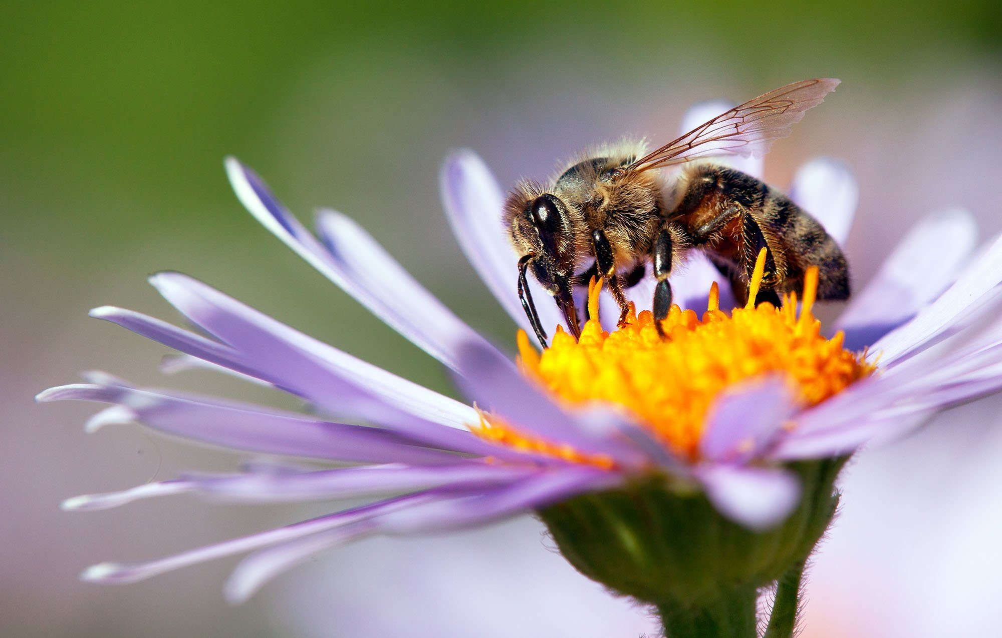 Here's Why You Shouldn't Kill Bees in Your Yard