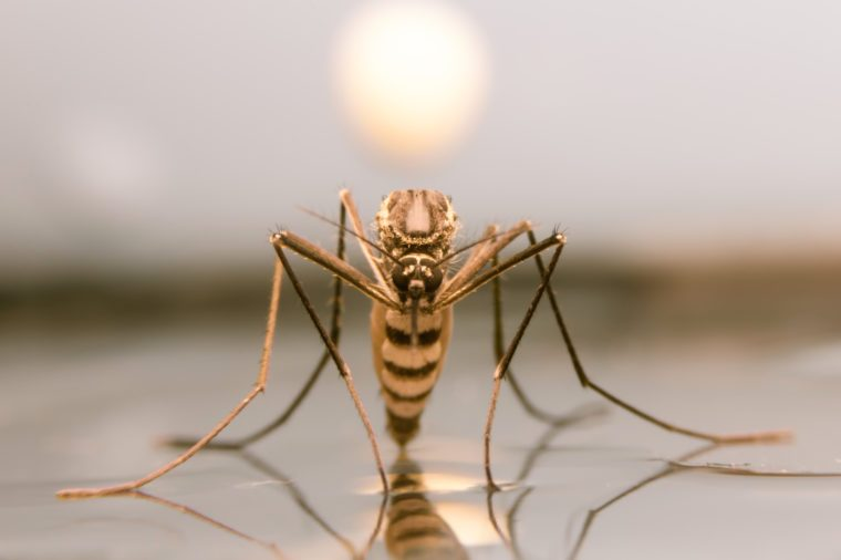 Macro mosquito on water in sunset background