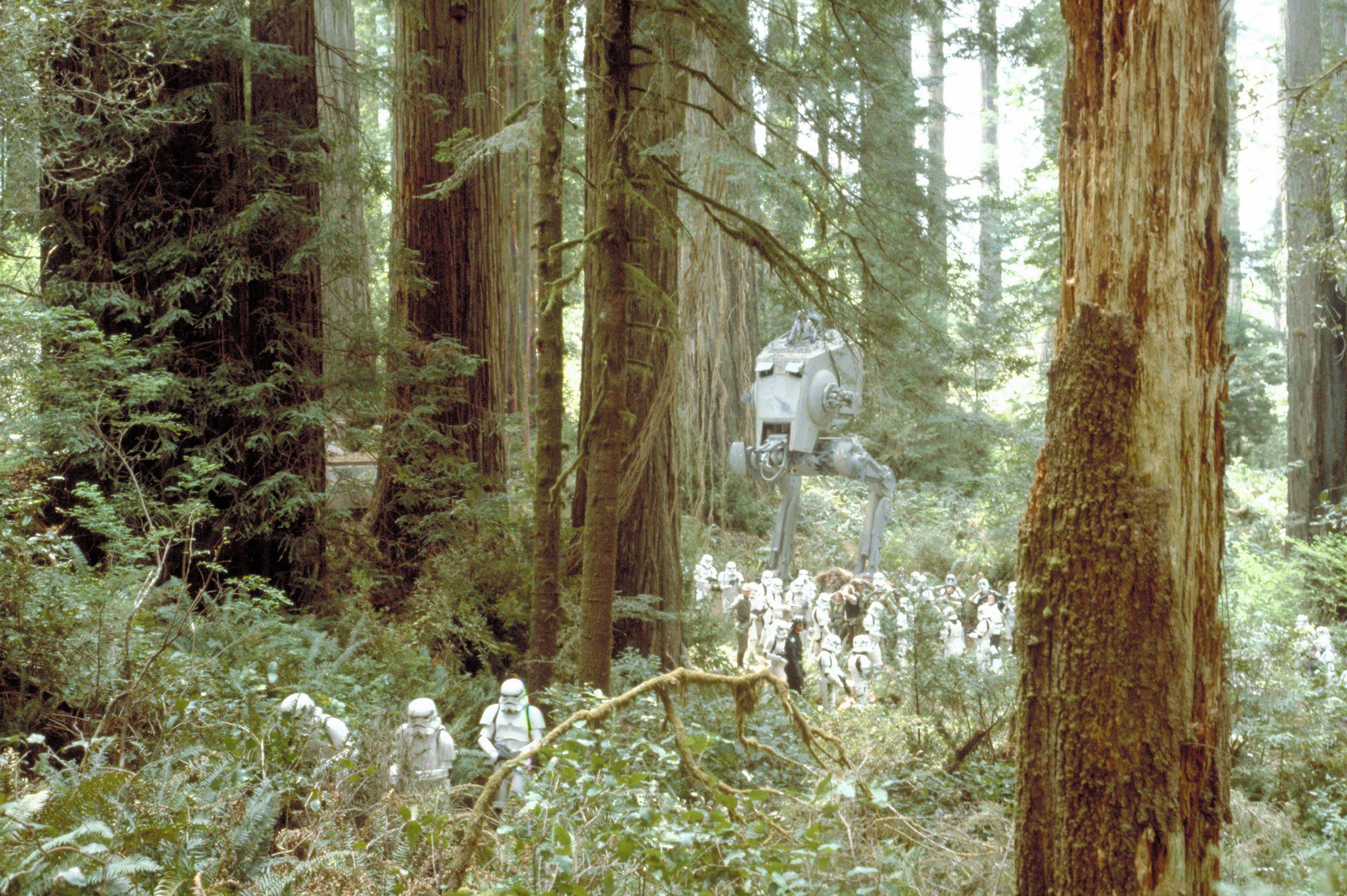 Northern California Redwoods Star wars