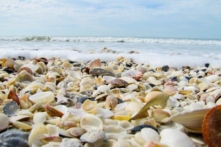 Seashells On Beach