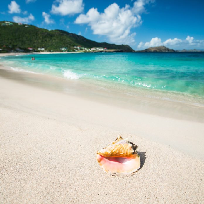 15 Beaches with the Best Seashells in the World