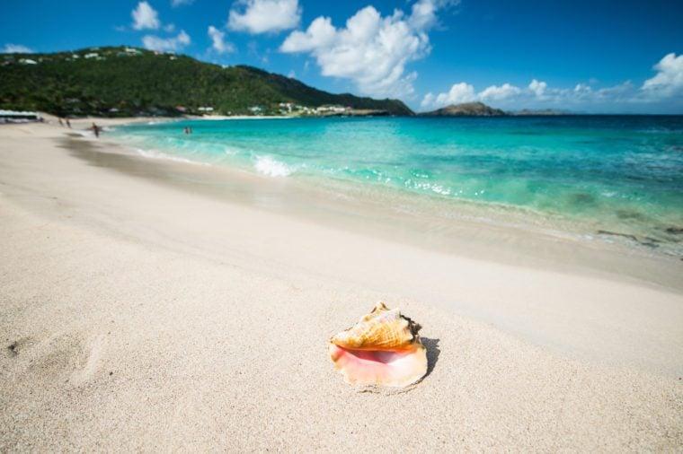 Shell in a Caribbean sea