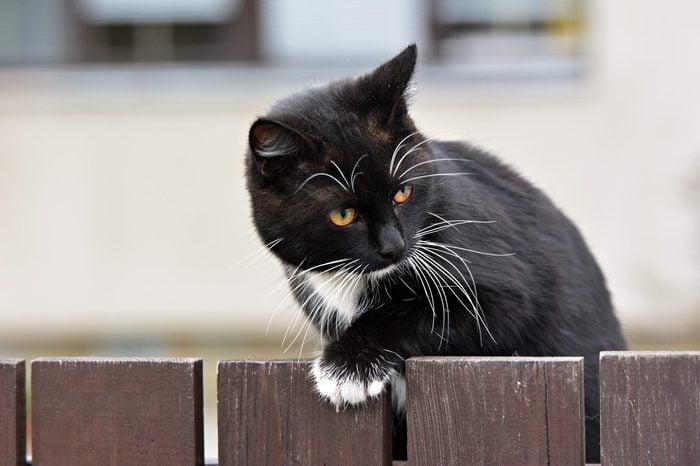 Black cat outdoors