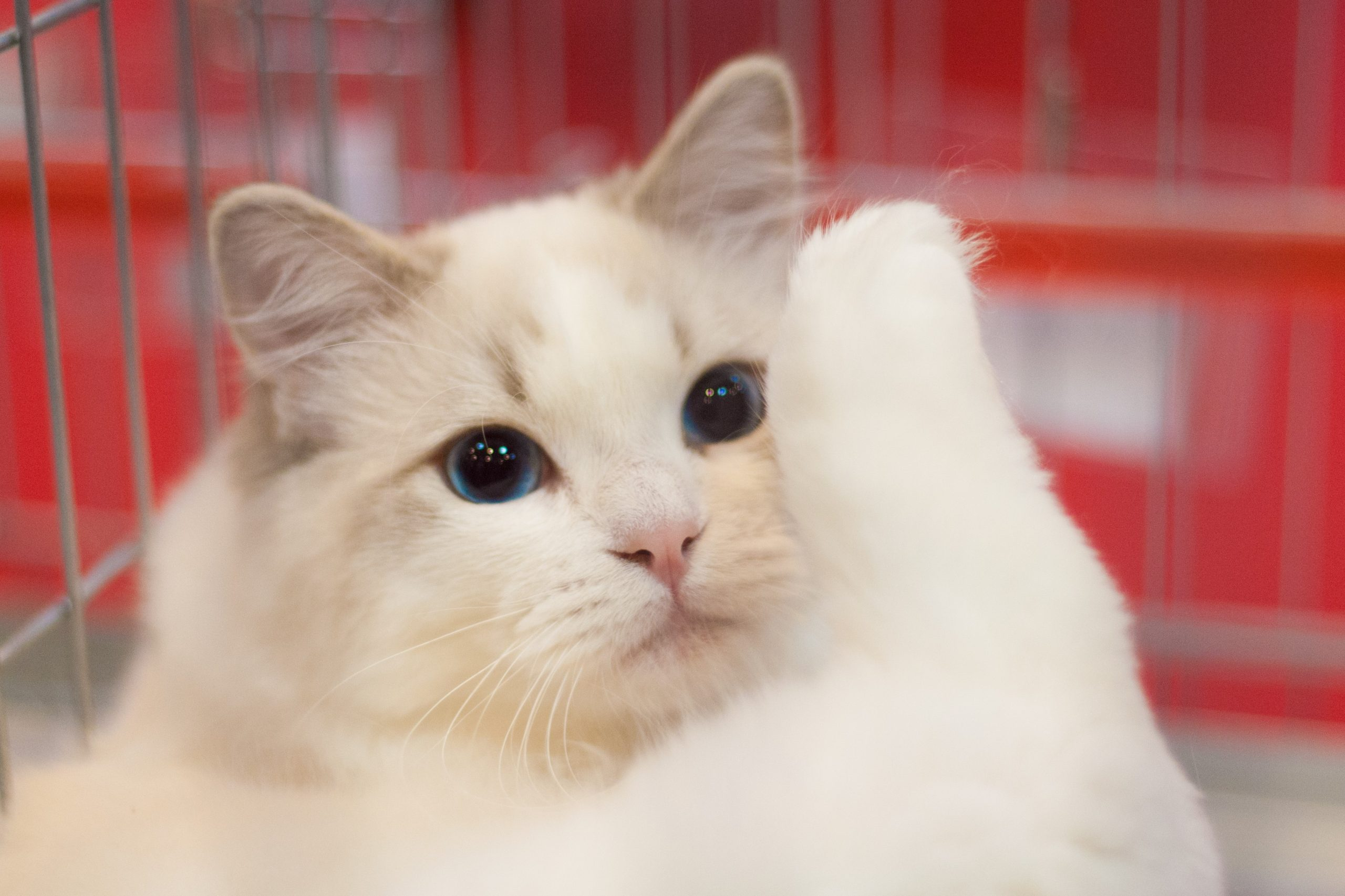 A collection of animals pictures with the most cute cats.