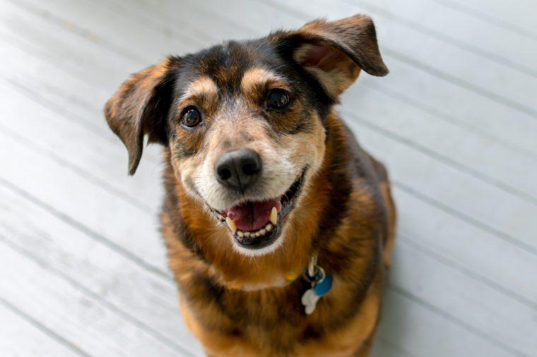 Happy dog on gray porch