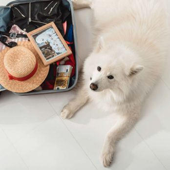 The 10 Best Airlines for Traveling with Dogs