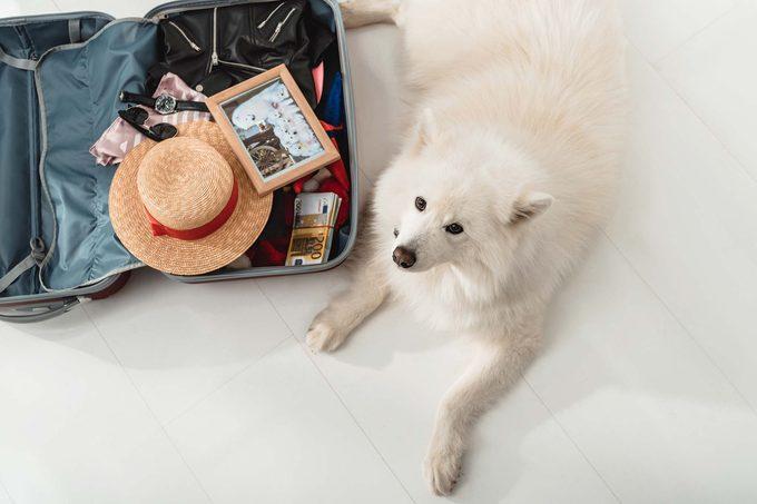 dog suitcase travel