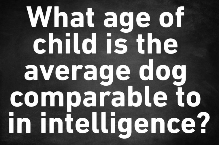 genius trivia question dog child intelligence