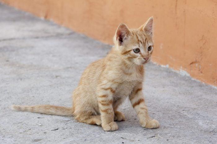 Red lined Kitten