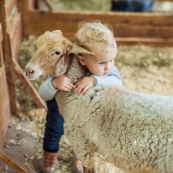 The Hidden Health Danger at Petting Zoos