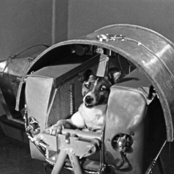 Animals That Made It to Space Before You Did
