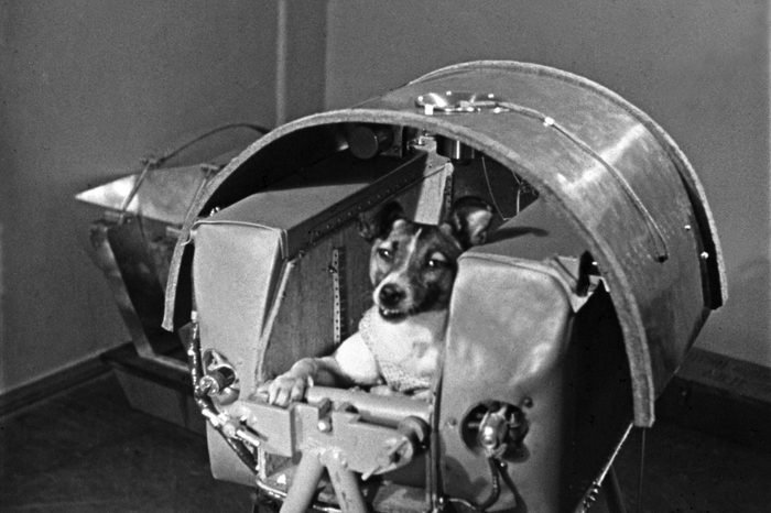 VARIOUS Laika, the first dog in space, in the sputnik 2 capsule.