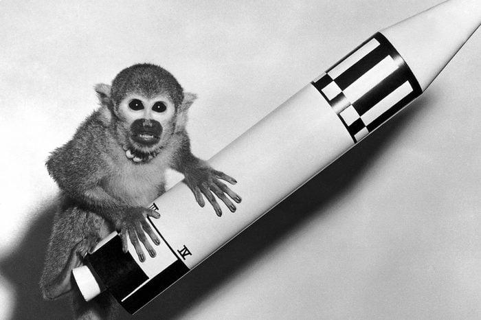 VARIOUS Huntsville, Alabama: May 29, 1959. Monkey Baker, the payload of Jupiter (AM-18), poses on a model of the Jupiter vehicle.