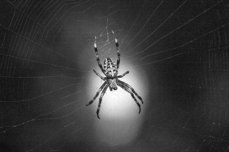 Macro view of cross spider (Araneus diadematus) in cobweb over light spot on green garden background