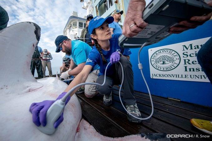 seaworld shark rescue