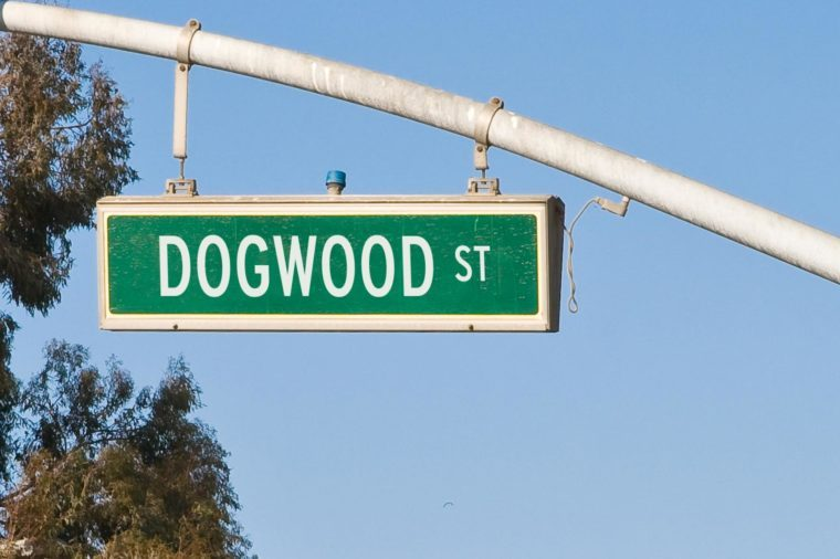 dogwood street