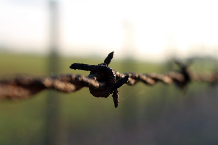 A close-up of the barbed wire in the fence surrounding the grounds of the Majdanek concentration and extermination camp on the outskirts of Lublin, Poland.