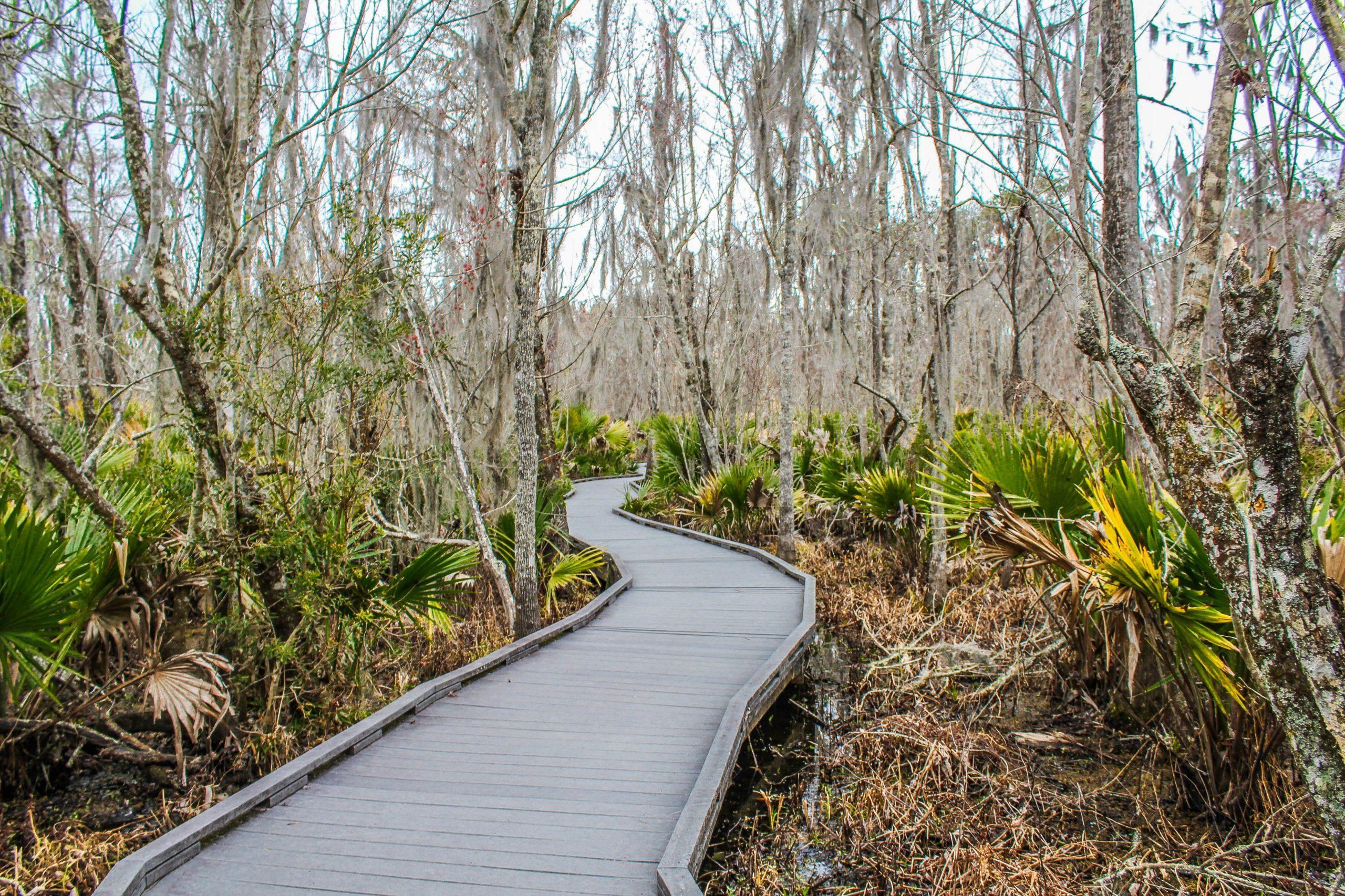 Barataria Preserve - Jean Lafitte National Historical Park