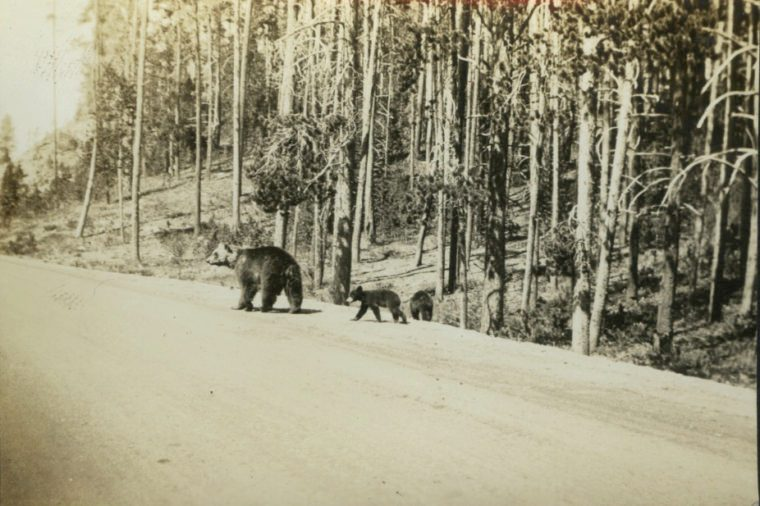Roadside yellowstone national park