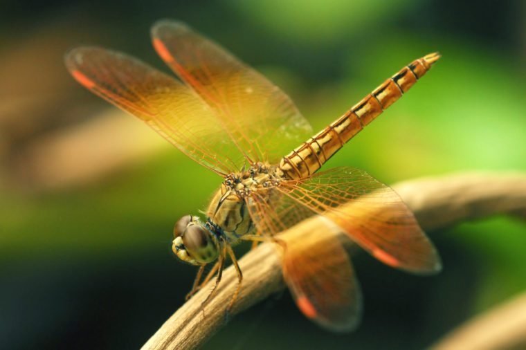 Closeup of a Dragon Fly on a twig