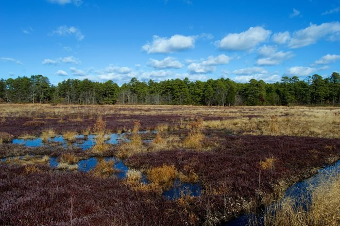Cranberry Bogs at Double Trouble State Park New Jersey