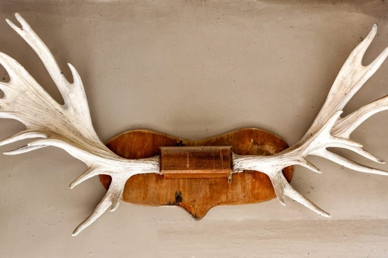 Elk / deer antlers mounted on the wall