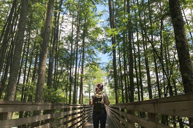 Hiker walks along path between cypress trees.