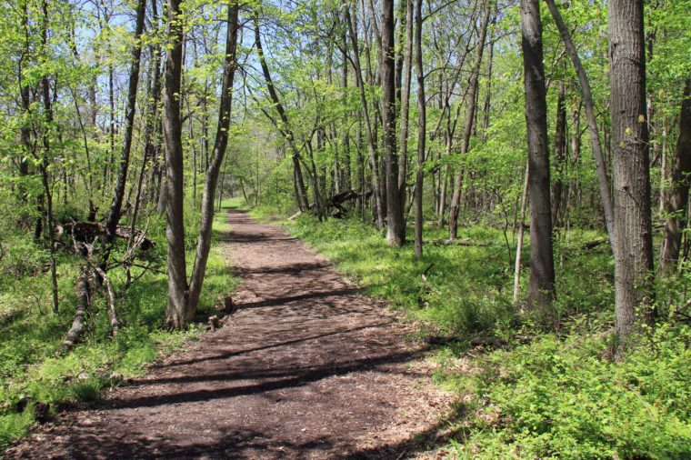 Inviting path in the woods in the spring with fresh leaves on the trees