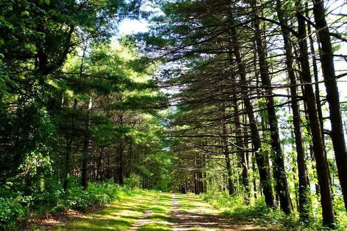 The view of hiking trail under the pine trees in the summer near Beltzville State Park, Lehighton, Pennsylvania, U.S.A