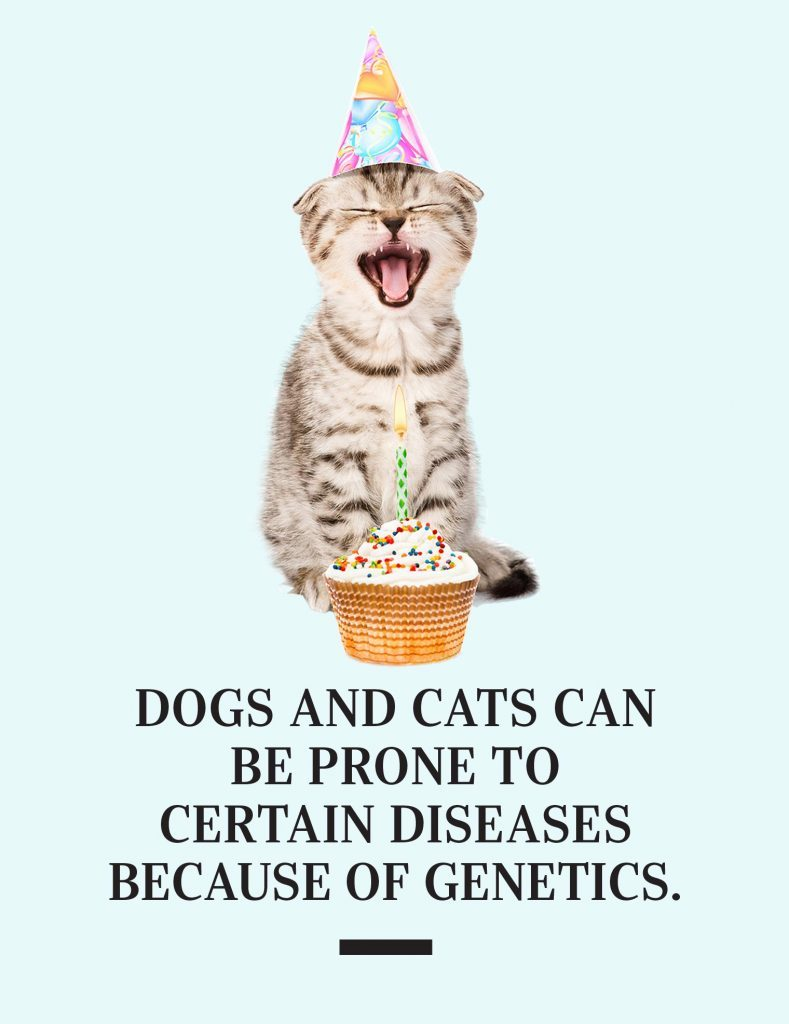 Dogs and cats can be prone to certain diseases because of genetics.