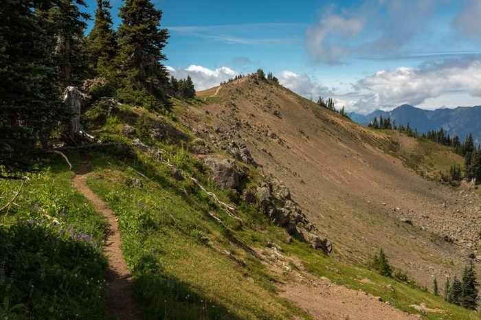 Walking along a narrow stretch of the Hurricane Hill Trail, Olympic National Park, Washington, USA